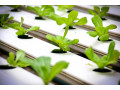 best-hydroponic-lights-in-cranbourne-small-0