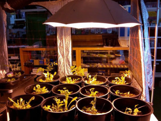 Best Deals on Hydroponic Systems & Components in Melbourne