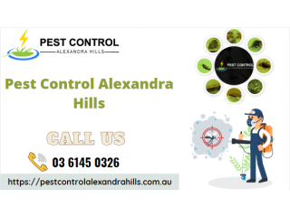 Top Pest Control Services in Alexandra Hills