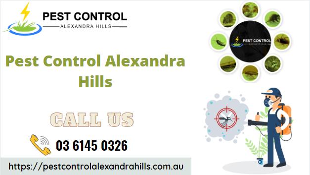 top-pest-control-services-in-alexandra-hills-big-0
